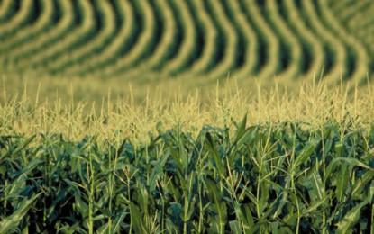 Governo prevê avanço de 1% no valor da produção agropecuária em 2014