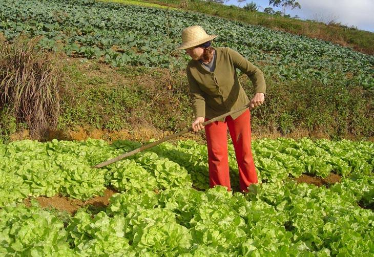 Agricultura familiar ocupa 30% da área rural da capital gaúcha