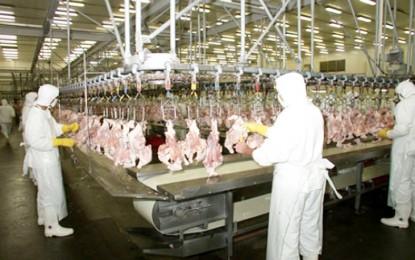 Baixa oferta e maiores embarques elevam preço da carne de frango