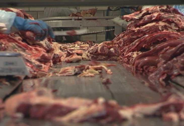 Rabobank prevê melhora na oferta e demanda de carne bovina no quarto trimestre