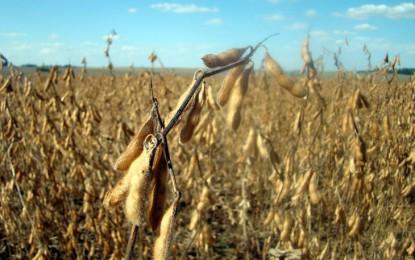 Técnica Rural – Saiba como é feita a dessecação da soja e a regulagem da colheitadeira