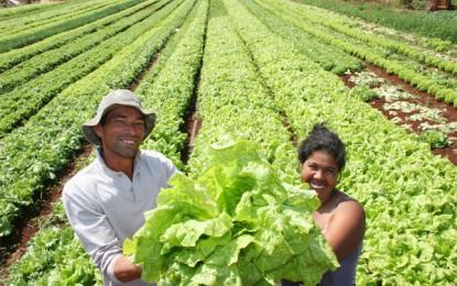 Agricultores familiares vendem mais de 7 milhões (Kg) em produtos em 2014