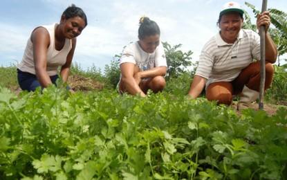 Agricultura familiar já contratou R$ 8,3 bilhões na safra 2014/2015