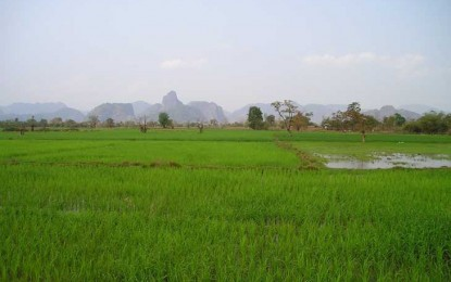 Chuva atrasa plantio do arroz no Rio Grande do Sul