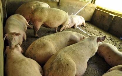 País quer novos mercados para carne e leite