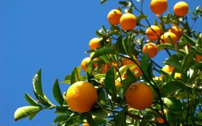 PIB do agronegócio cresce 1,90% nos primeiros sete meses de 2014