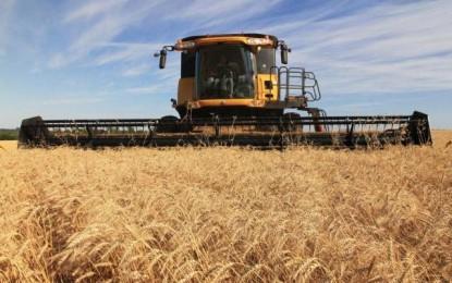Doenças afetam qualidade do trigo gaúcho