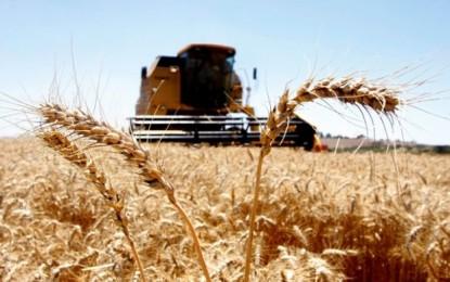 Colheita de trigo avança no Rio Grande do Sul, que comercializa estoque da safra anterior