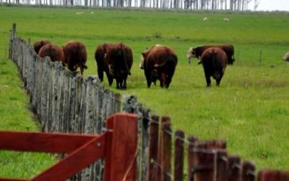 Escassez eleva o preço da carne