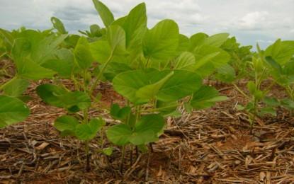 Aprovado projeto que proíbe plantar soja duas vezes na mesma área durante ciclo em MS