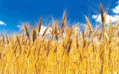 RS: Farsul pede prorrogação do ICMS de 2% para o trigo