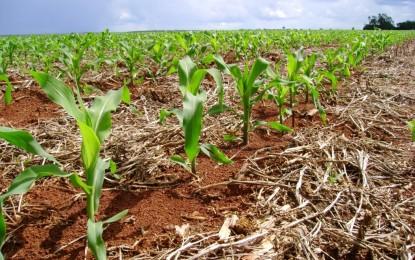 Plantio do arroz e do milho encaminham-se para o final no Rio Grande do Sul