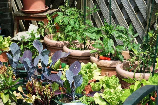 Dicas de como cultivar uma horta orgânica em casa