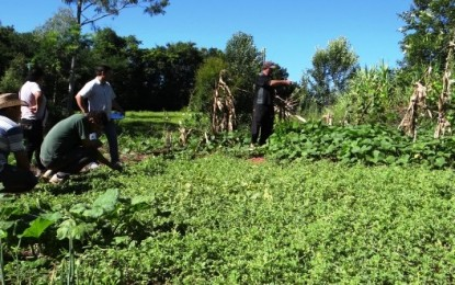 Produção orgânica é estimulada com certificação no Noroeste gaúcho