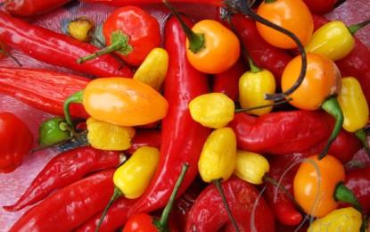 RS: Santa Maria terá agroindústria de plantas condimentares