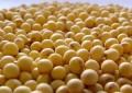 Sementes de alta qualidade aumentam produção de soja entre 10% e 15%