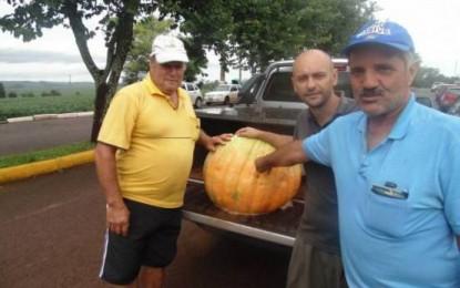 Moranga gigante é colhida por produtor de Boa Vista do Cadeado