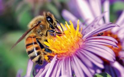 Quatorze variedades diferentes de abelhas sem ferrão são apresentadas na parcela de Apicultura