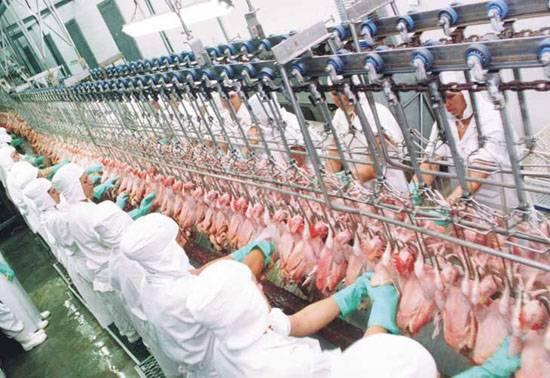 Receita Estadual identifica irregularidades no recolhimento de ICMS no setor de abate de aves e suínos