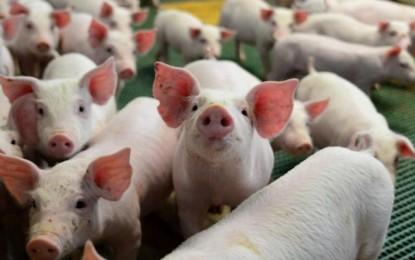 41º Dia Estadual do Porco reúne produtores de todo o Estado em Palmitinho