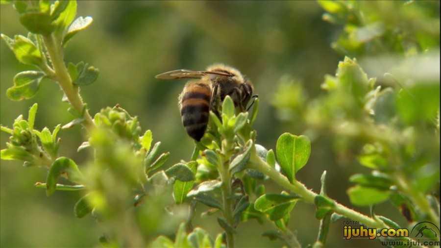 Pesquisa identifica abelha e planta nativas que produzem mel branco