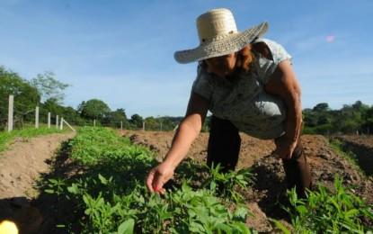 Estado libera R$ 29 milhões para projetos da agricultura familiar