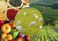 Agricultores familiares já podem acessar bônus de julho, referente a garanta de preço minimo.