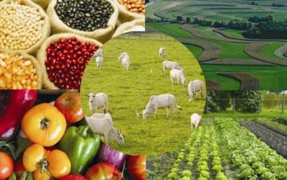 Valor bruto da produção agropecuária bate novo recorde