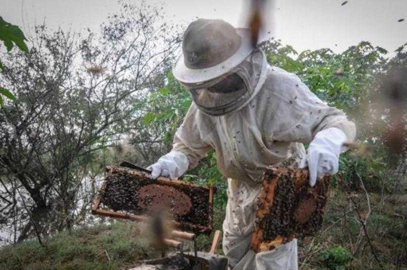 GT estudará estratégias para promover consumo do mel no RS