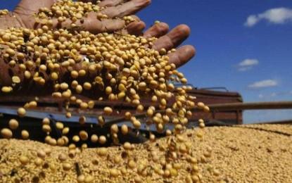 RS: Alta do dólar poderá significar mais elevação da soja na região