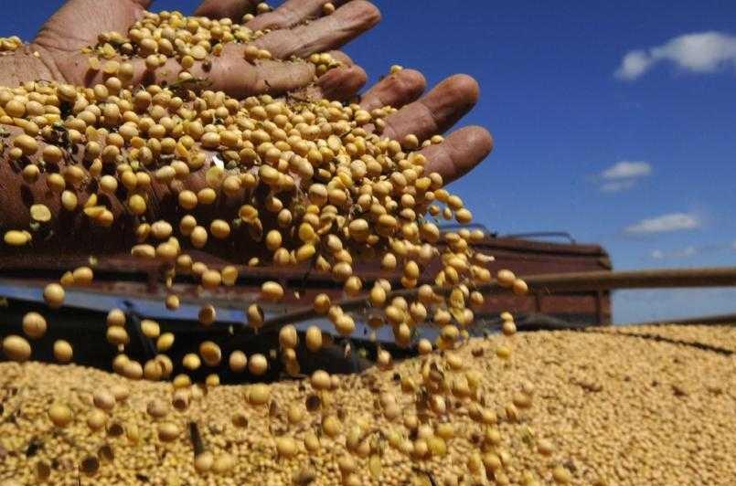 Brasil negocia com China habilitação de unidades para exportação de farelo de soja
