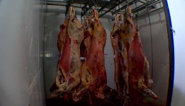 Mais de 5 mil bovinos deixam de ser abatidos por dia devido à greve no RS
