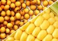 Ministério da Agricultura publica preços mínimos para culturas de verão