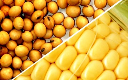 Soja e milho podem não ser impactados pelo La Niña, diz estudo