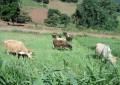 Plano Safra Disponibiliza R$ 30 Bilhões em Crédito para a Agricultura Familiar