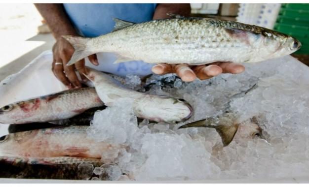 Brasil importou US$ 1bilhão em peixes, em 2018