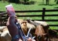 Conheça dicas essenciais para o bom resultado na hora de vacinar seu rebanho bovino