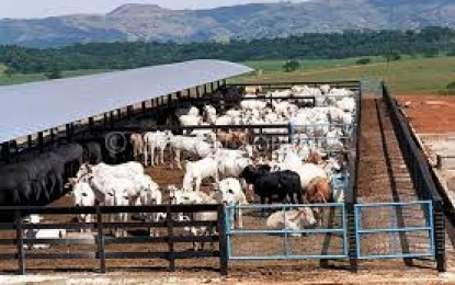 Confinamento de bovinos cresce no RS