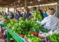 Cresce número de feiras e mercados especializados em alimentos orgânicos