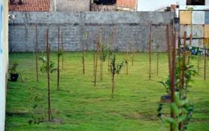 Dicas de Plantio de árvores frutíferas e manejo do pomar
