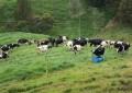 Custo de produção do leite registra recuo pelo sexto mês seguido; Cenário se reflete pela queda na cotação do milho