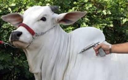 Indústria de produtos para saúde animal anuncia mudanças na vacina contra aftosa