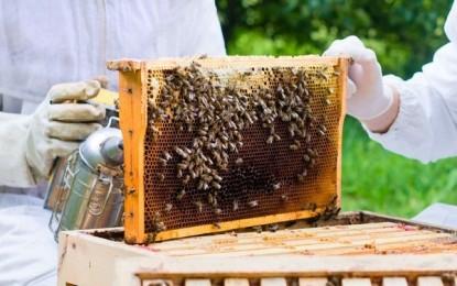 Setor apícola divulgará benefícios do consumo do mel durante a Expointer