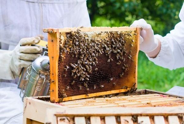 Manejo apícola eleva em 70% produção de mel