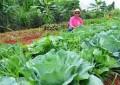 Oportunidade para novas redes de agroecologia