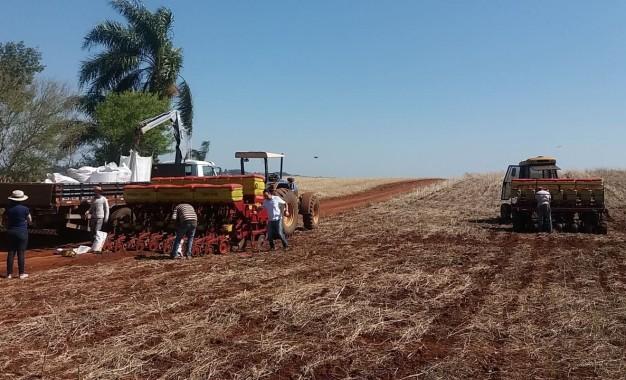Cresol Humaitá, acompanha plantio de milho na região