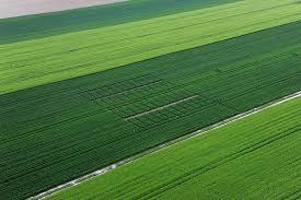 Rede de satélites permite identificar nutrientes presentes nas plantas e deficiências do solo.