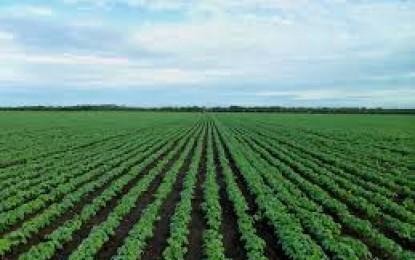 Estimativa inicial é de aumento da área da soja no RS