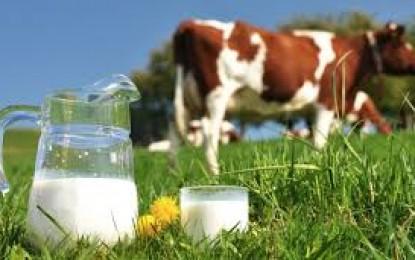 Mercado do leite: Possibilidade de cota para importação de leite do Uruguai