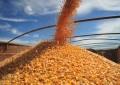 Preços do milho devem melhorar em 2018, diz consultor